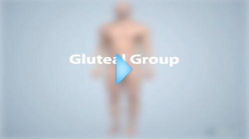 gluteal group video